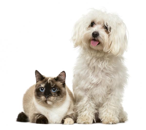 allergyformula-cani-e-gatti