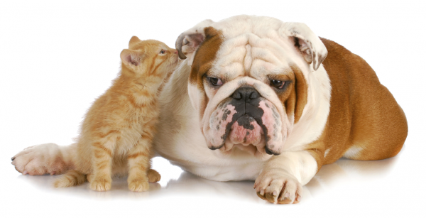 armonyformula-cani-e-gatti