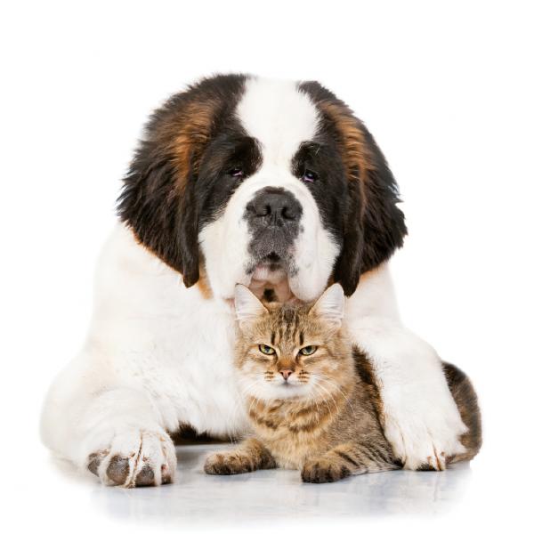 bowelformula-cani-e-gatti