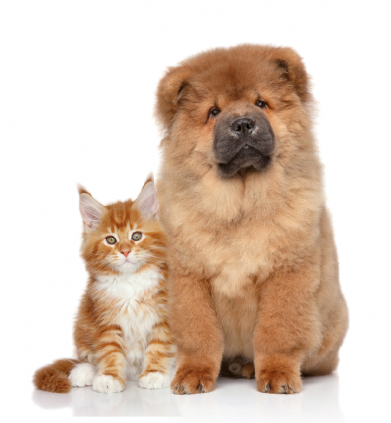 enteroformula-cani-e-gatti
