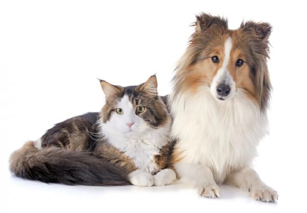 flamformula-cani-e-gatti